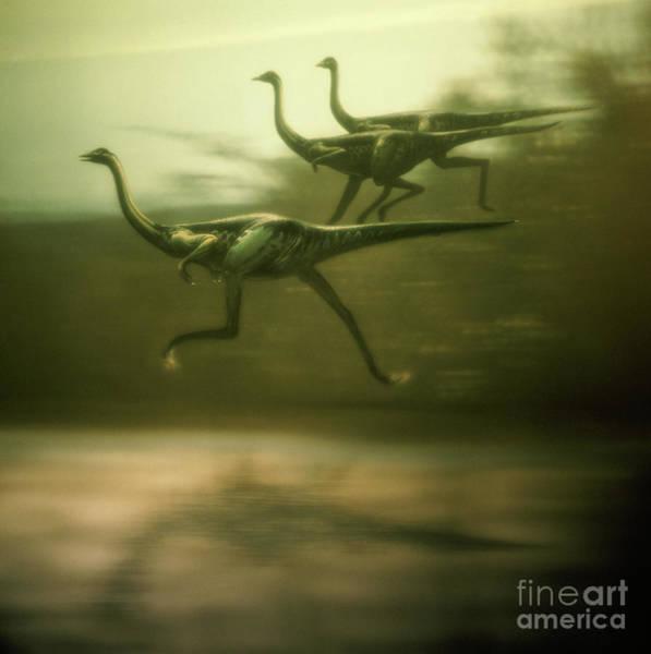 Photograph - Ostrich Dinosaurs by Warren Photographic