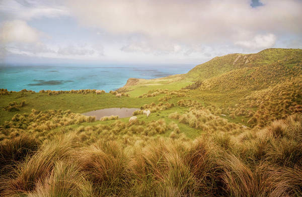 Photograph - Otago Peninsula New Zealand Hike II by Joan Carroll