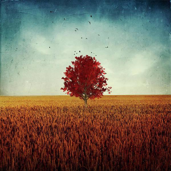 Photograph - Other - Red Tree by Dirk Wuestenhagen
