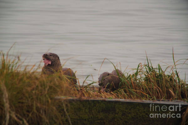 Wall Art - Photograph - Otter Eating A Fish  by Jeff Swan