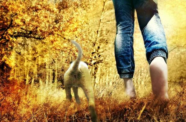 Dog Walker Photograph - Our Morning Walk by Diana Angstadt