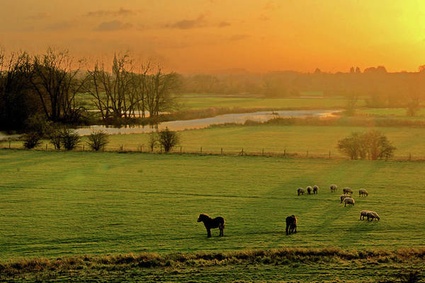 Herd Of Horses Wall Art - Photograph - Ouse Valley by Images By Roy Dobb