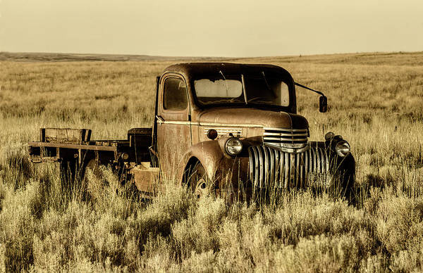 Photograph - Out To Pasture by Mark Kiver