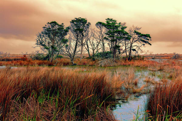Wall Art - Photograph - Outer Banks Marsh by Dan Carmichael