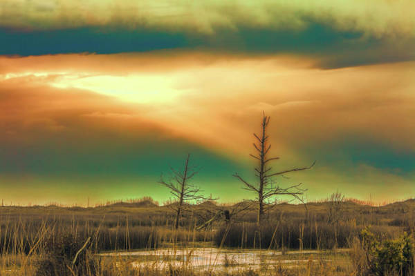 Wall Art - Photograph - Outer Banks Marsh Trees And Roll Cloud by Dan Carmichael