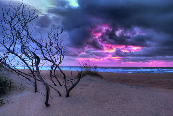 Wall Art - Photograph - Outer Banks Standing Driftwood At Sunrise by Dan Carmichael