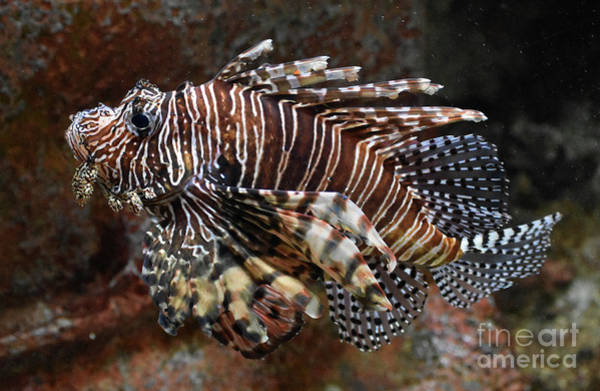 Critters Photograph - Outgrowing The Aquarium by Skip Willits