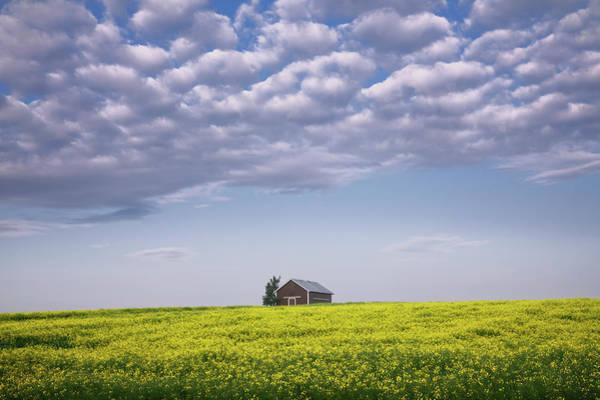 Photograph - Outstanding In Its Field by Dan Jurak