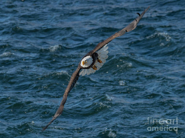 Wall Art - Photograph - Over Rough Waters by Mike Dawson