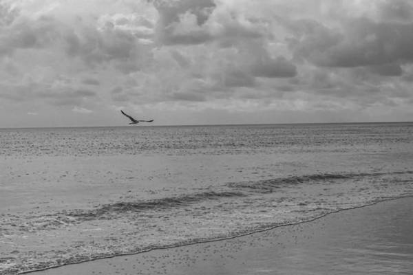 Photograph - Overcast Beach Black And White by Jeremy Guerin