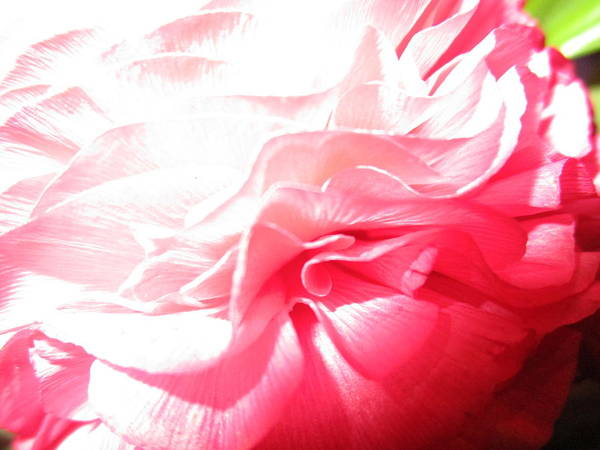 Photograph - Overexposed Beauty by Rosita Larsson