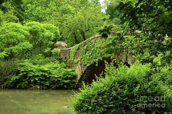 Photograph - Overgrown And Beautiful Gapstow Bridge by Christiane Schulze Art And Photography