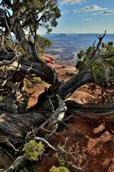 Photograph - Overlooking Green River In Canyonlands by Ray Mathis