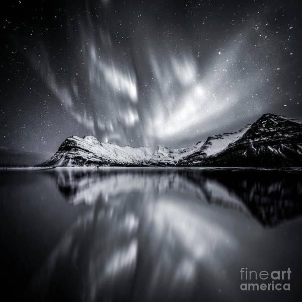 Wall Art - Photograph - Overnight Sensation by Evelina Kremsdorf
