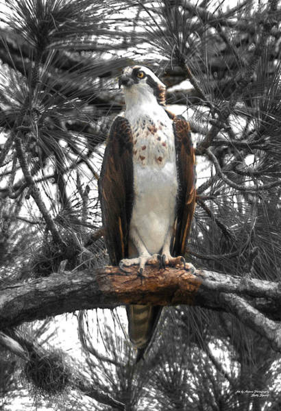 Photograph - Overseer by Sally Sperry