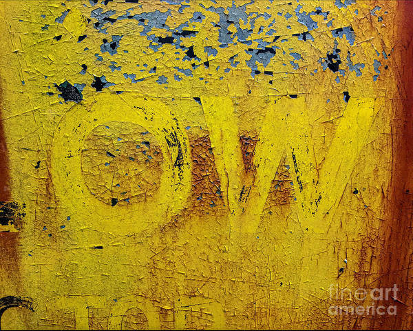 Photograph - OW  by Terry Rowe
