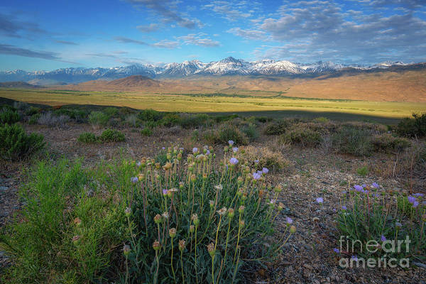 Wall Art - Photograph - Owens Valley Overlook  by Michael Ver Sprill