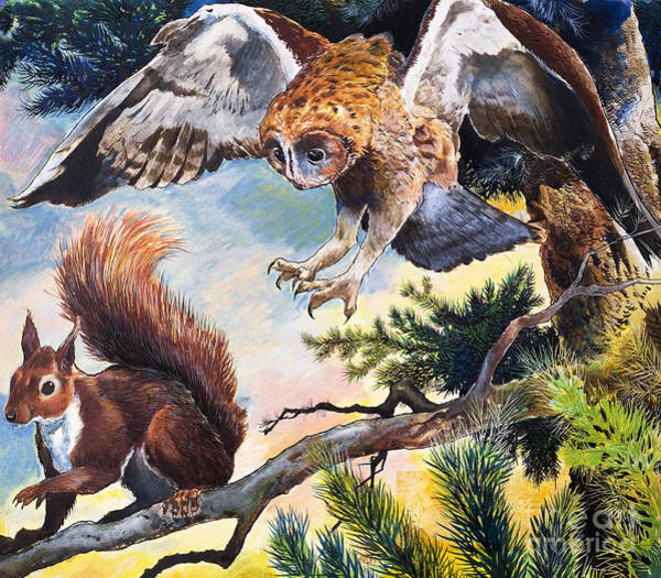 Wall Art - Painting - Owl And Squirrel by Gw Backhouse