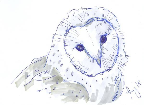 Drawing - Owl Drawing by Mike Jory
