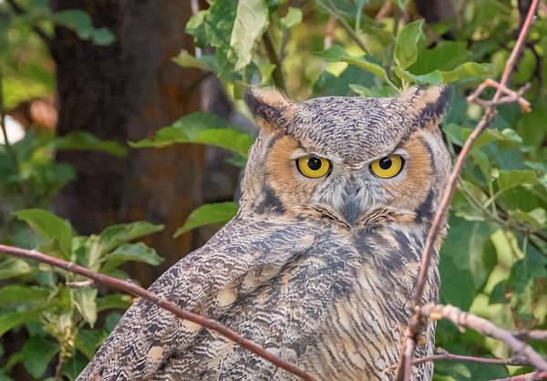 Photograph - Owl Eyes by Loree Johnson