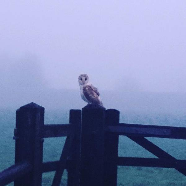 Photograph - Owl In The Mist by Samuel Pye