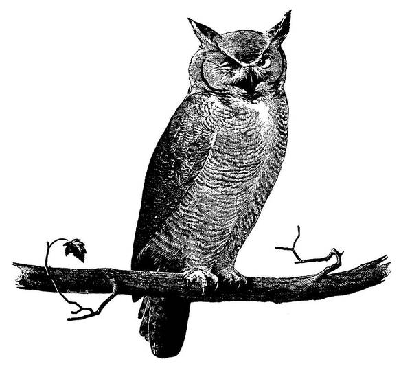 Digital Art - Owl On Branch by Csa Images