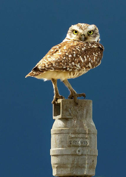 Photograph - Owl On The Sprinkler Head by Jack Peterson