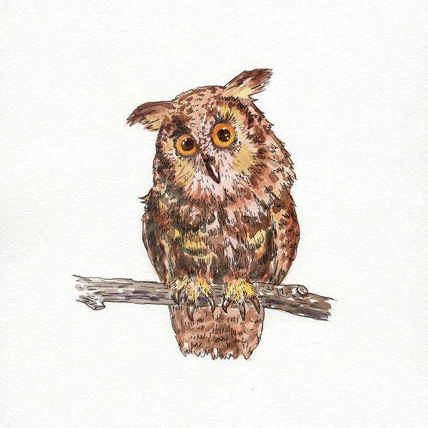 Wall Art - Painting - Owl Squared Watercolour  by Irina Sztukowski