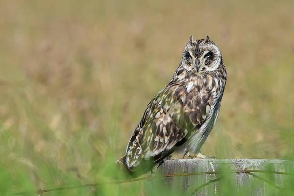 Photograph - Owl Staring by Pamela Walton