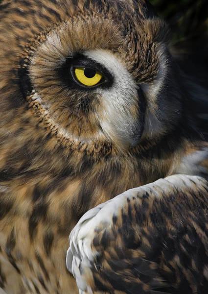 Owl Strikes A Pose Art Print