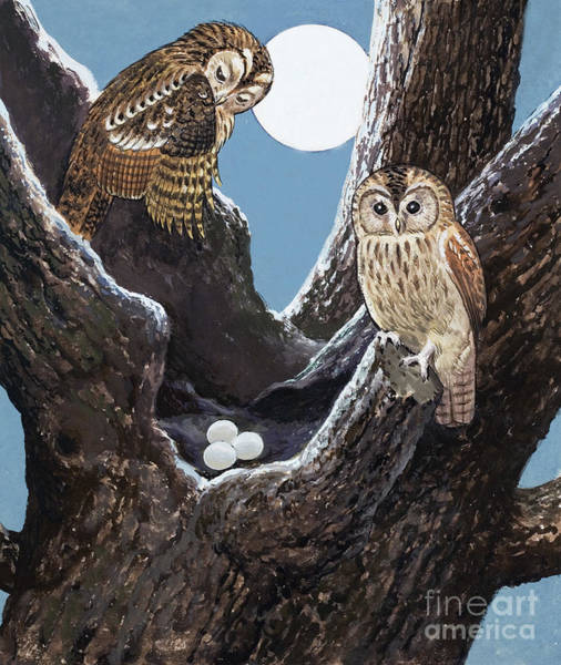 Wall Art - Painting - Owls Nest by Unknown