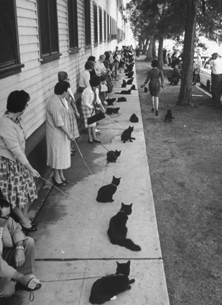 Human Interest Photograph - Owners With Their Black Cats, Waiting In by Ralph Crane