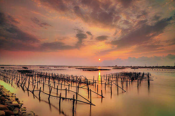 Taiwan Photograph - Oyster Racks by Taiwan Nans0410