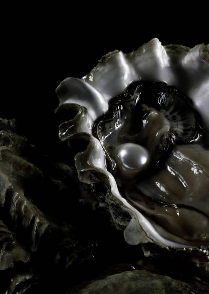Wall Art - Photograph - Oyster With Pearl On Water, Close-up by Jaime Chard