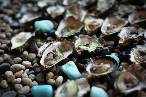 Wall Art - Photograph - Oysters In Shell With Cucumber On Stone by David Niddrie