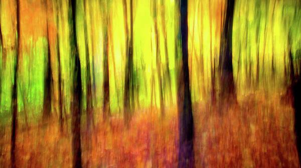 Photograph - Ozark Autumn Blaze by Harriet Feagin