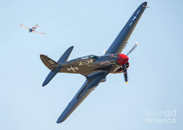 Photograph - P-40 Warhawk Aircraft In Dogfight by Kevin McCarthy