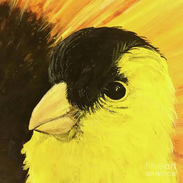 Photograph - p77 Goldfinch  by Lizi Beard-Ward