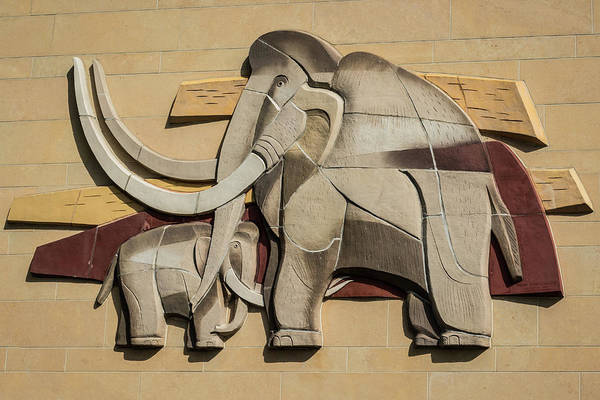 Photograph - Pachyderms by Stewart Helberg