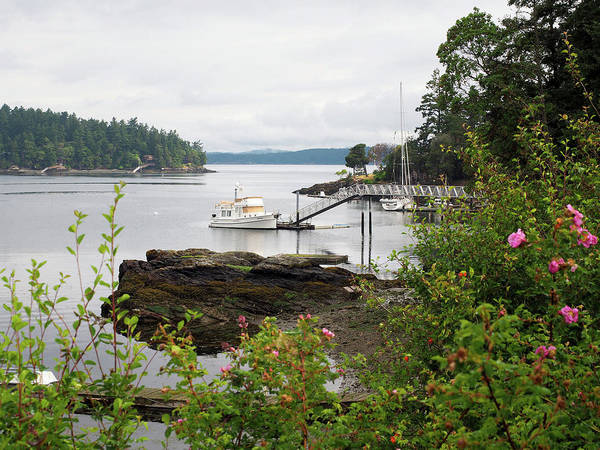 Wall Art - Photograph - Pacific Northwest Harbor by Stephanie McDowell