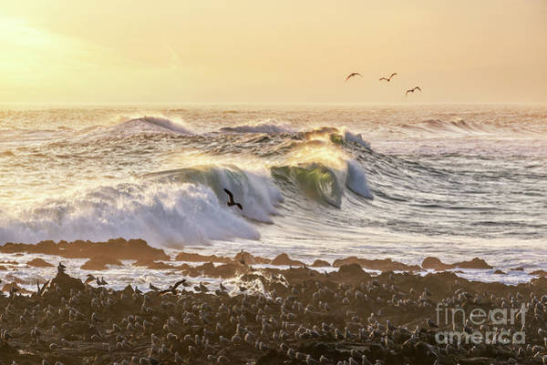 Wall Art - Photograph - Pacific Ocean In Arica, Chile by Delphimages Photo Creations