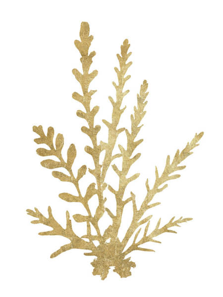 Wall Art - Painting - Pacific Sea Mosses IIi Gold Crop by Wild Apple Portfolio