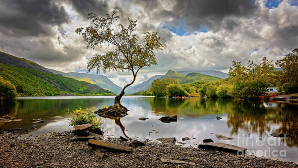 Wall Art - Photograph - Padarn Lake Tree  by Adrian Evans