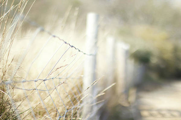 Fence Photograph - Pagham Harbour Fence by Svgiles