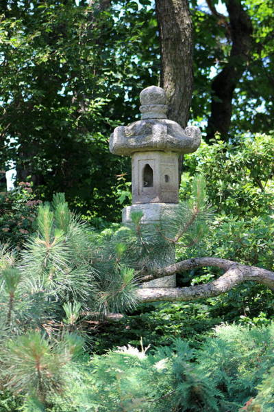 Photograph - Pagoda Behind Evergreen by Colleen Cornelius
