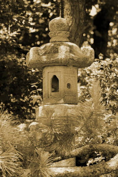 Photograph - Pagoda Behind Evergreen In Sepia by Colleen Cornelius