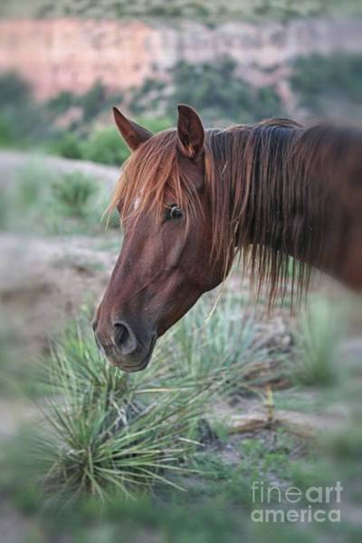 Photograph - Paint Pony In The Canyon by Natural Abstract Photography