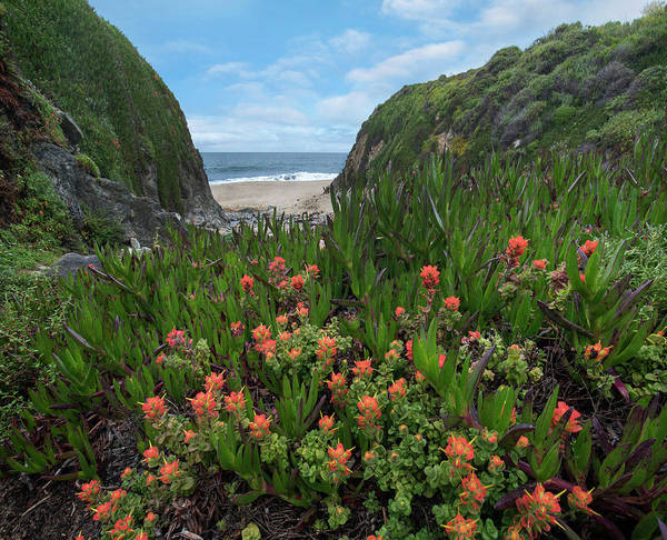 Wall Art - Photograph - Paintbrush And Ice Plant, Garrapata by Tim Fitzharris