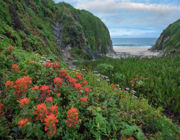 Photograph - Paintbrush And Seaside Fleabane by