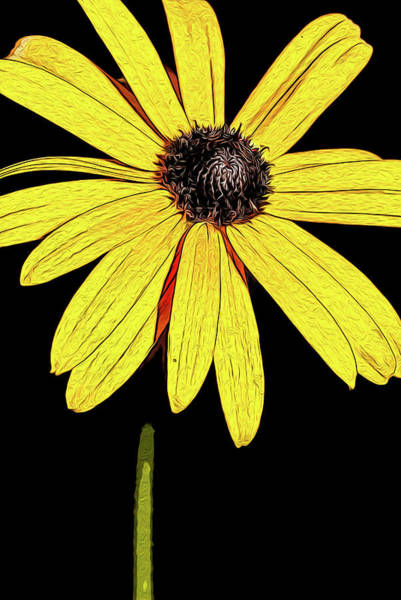 Mixed Media - Painted Black-eyed Susan Portrait by Onyonet  Photo Studios